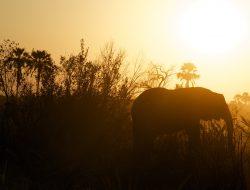 African_safari_family_vacation