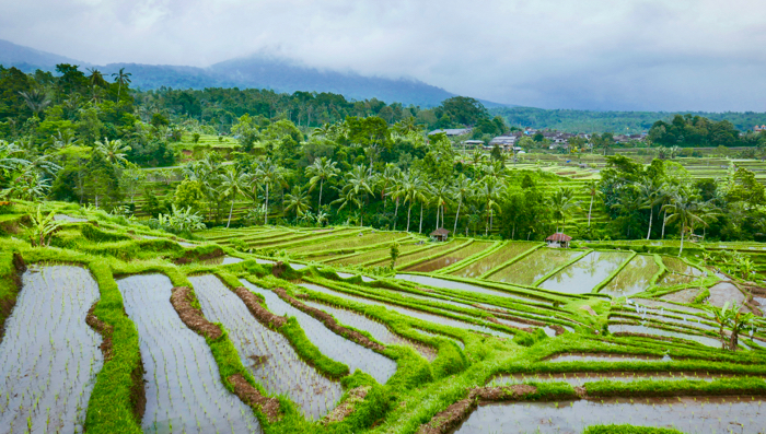 Bali's best kept secrets- rice terraces
