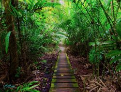 borneo_jungle_walkway_reduced