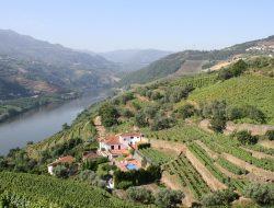 Hills of Douro Valley