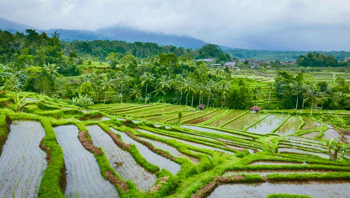 Bali's best kept secrets- rice terraces