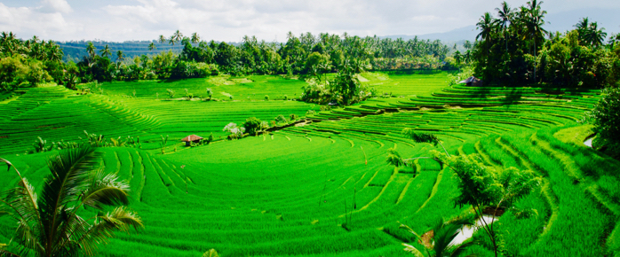 bali_rice_terraces-1