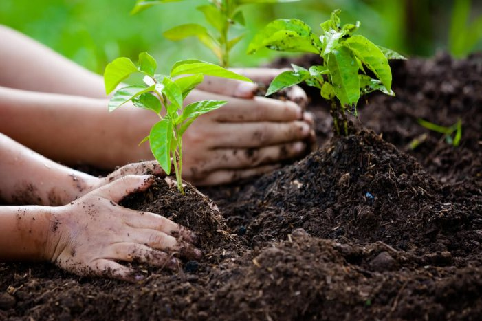 carbon offsetting what is it good for