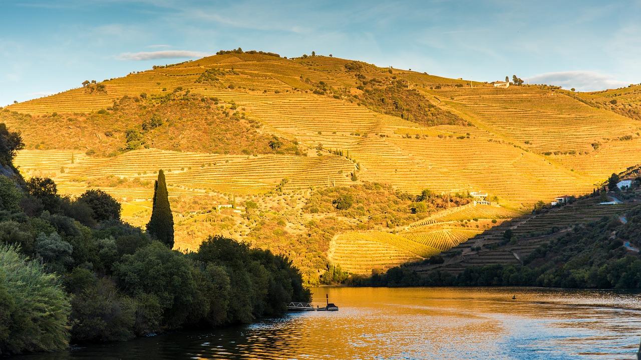 Rolling hills of vineyards