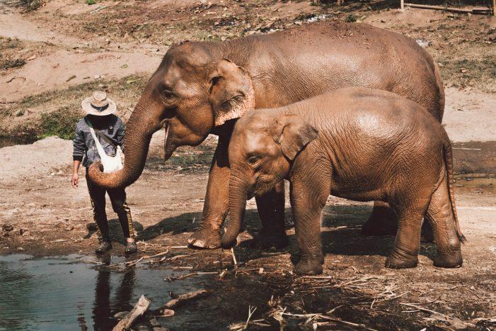 Visit Northern Thailand Elephants