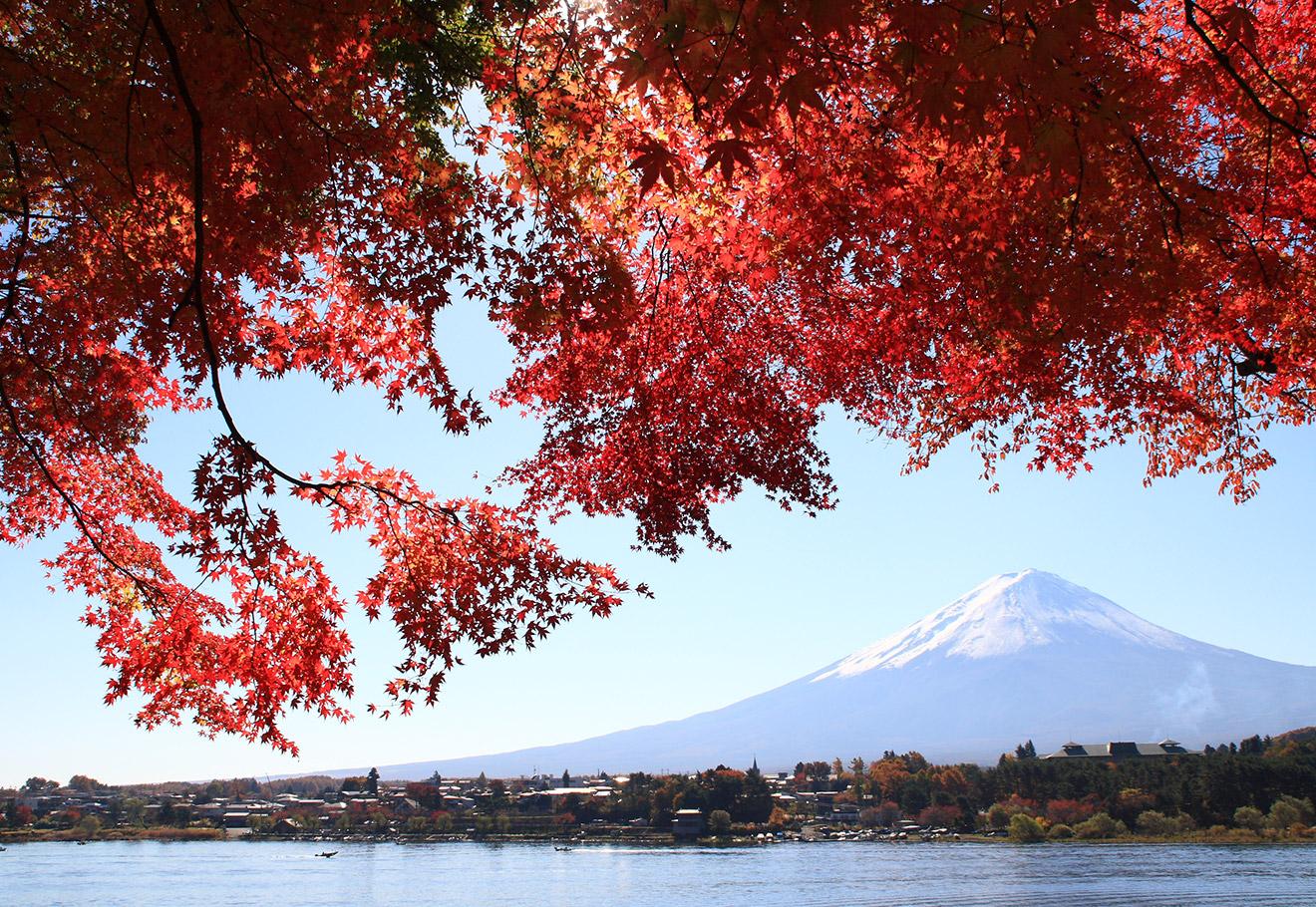 Red leaves over Lake Kawaguchiko and Mount Fuji