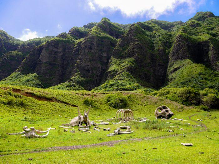 dinosaur bones at Kualoa Ranch Park, Oahu, Hawaii
