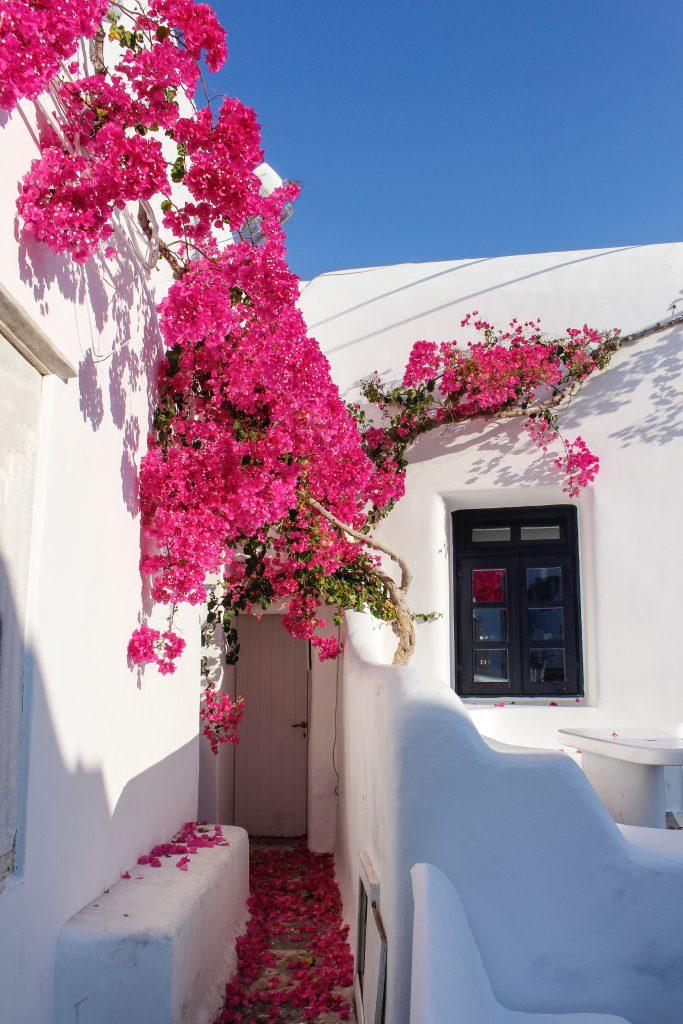 Greek flowers on Mykonos