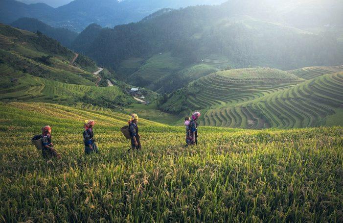 Trekking the rice fields of Sapa