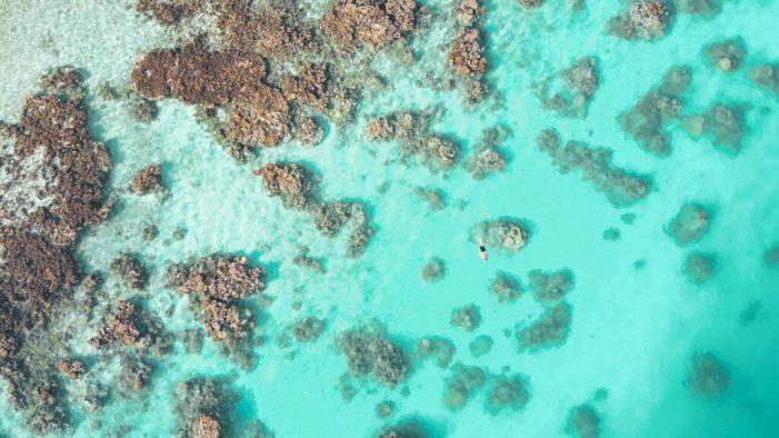 Snorkelling in Vanuatu